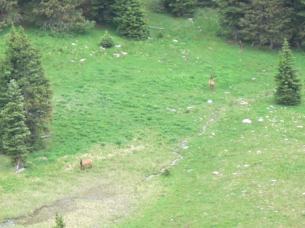 Elk below feeding